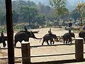Elephant show in Chiang Mai P1110451.JPG