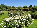 Elizabeth Park, Hartford, CT - rose garden 9 - DSC01446.JPG