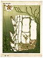 Elodea canadensis, Gaspary (8232498434).jpg