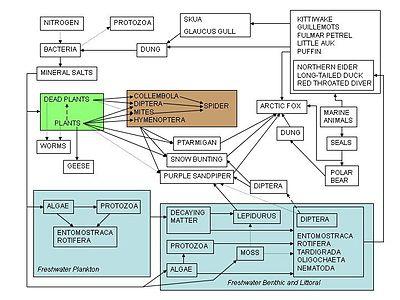 Ekosistemos mitybos tinklas