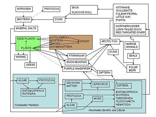 High School Earth ScienceEcosystems Wikibooks open books for – Food Web Worksheet High School