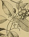 Emergency food plants and poisonous plants of the islands of the Pacific (1943) (21100711078).jpg