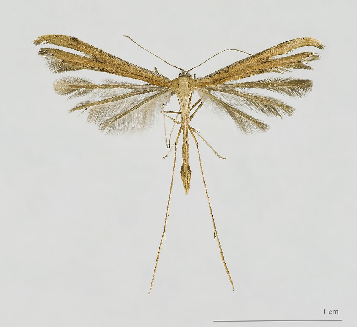 White Moth Insect Kitchen Thin Wings Silver Coat