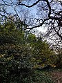 Epping Forest 20180125 150028 (49374739347).jpg
