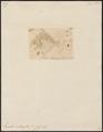 Equula interrupta - 1700-1880 - Print - Iconographia Zoologica - Special Collections University of Amsterdam - UBA01 IZ13500523.tif