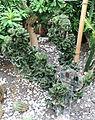 Euphorbia lactea f. cristata - Chengdu Botanical Garden - Chengdu, China - DSC03555.JPG