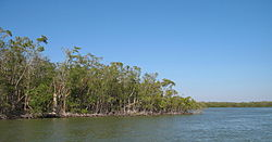 Everglades Mangroves 01.jpg
