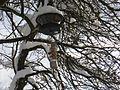 Fågelmatare i Tyresö 2.jpg