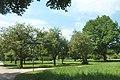 FFM Niddapark Streuobstwiese.jpg
