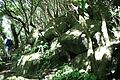 Fajã do Conde, ilha das Flores, 9, Açores, Arquivo de Villa Maria, Terceira, Açores.JPG