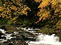 Fall Color on Cheeney Creek-Mt Hood (23289768213).jpg