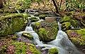 Fall Creek (Revisited) (9) (11659595425).jpg