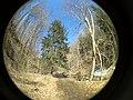 Fall Run Park in Shaler Township, late winter - 32.jpeg