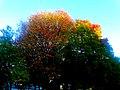 Fall in Maple Bluff - panoramio (2).jpg