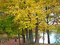 Fall landscape in park.jpg