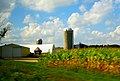 Farm with Three Silos - panoramio (11).jpg