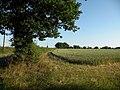 Farmland alongside Oak Road - geograph.org.uk - 1397513.jpg