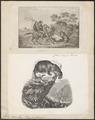 Felis onca - 1700-1880 - Print - Iconographia Zoologica - Special Collections University of Amsterdam - UBA01 IZ22100164.tif