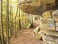 Felsenweg am Ferschweiler Plateau - geo.hlipp.de - 15176.jpg