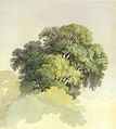 Feodor Vasilyev - The crowns of the trees.jpg
