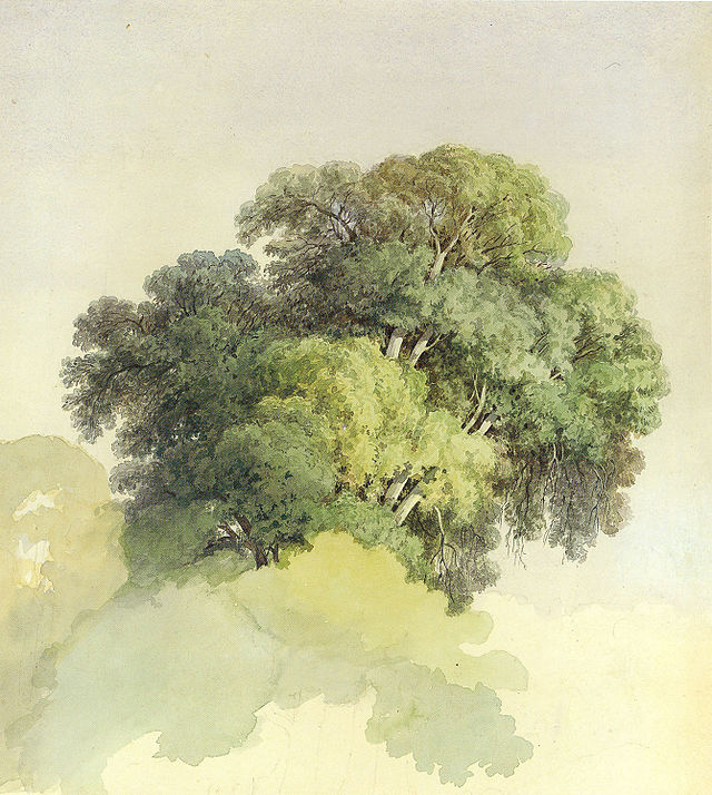 dessin du houppier d'un arbre peinture de fiodor vassiliev
