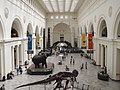 Field Museum (7398056420).jpg