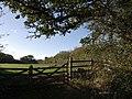 Field beside Mill Hill - geograph.org.uk - 598876.jpg