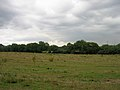 Field near Paynes Place Farm - geograph.org.uk - 226672.jpg