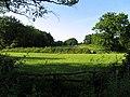 Field near Tadley Hill - geograph.org.uk - 28462.jpg