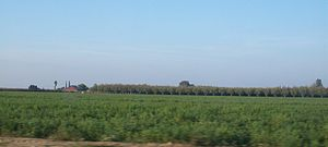 Turlock, California - Fields in Turlock