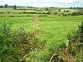 Fields Around Hardgrove Burn - geograph.org.uk - 565106.jpg