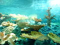 Finding Nemo Porthole.JPG