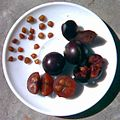 Flacourtia jangomas seeds fruit.jpg