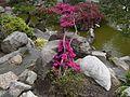 Flickr - brewbooks - Seike Japanese Garden (2).jpg