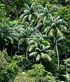 Floresta da Mata Atlântica.jpg