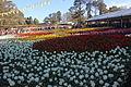 Floriade Canberra 2015 1.JPG