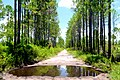 Florida Trail - panoramio.jpg