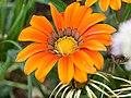 Flower (14933842322).jpg