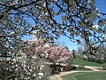 Flower trees in the Governor's Garden - panoramio.jpg