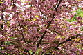 Flowering-tree - West Virginia - ForestWander.jpg