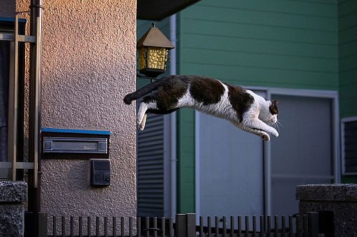 Flying catt (15624318422)