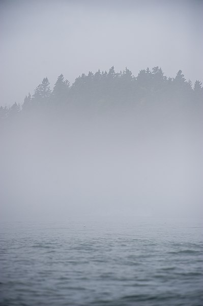 File:Foggy Maine Coastline (Unsplash).jpg