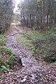 Footbridge on the High Weald Landscape Trail - geograph.org.uk - 1593490.jpg