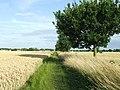 Footpath - geograph.org.uk - 1439778.jpg