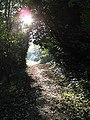 Footpath by Mutton Brook - geograph.org.uk - 290969.jpg