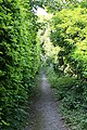 Footpath from Bouverie Avenue to Old Blandford Road, Salisbury - geograph.org.uk - 195397.jpg