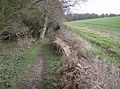 Footpath through Markwells Wood - geograph.org.uk - 353930.jpg