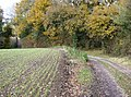 Footpath towards Binsted - geograph.org.uk - 623398.jpg