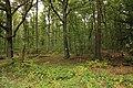 Forêt Départementale de Méridon à Chevreuse le 29 septembre 2017 - 07.jpg