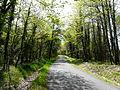 Forêt de Liorac Saint-Sauveur près le Dougnou.JPG